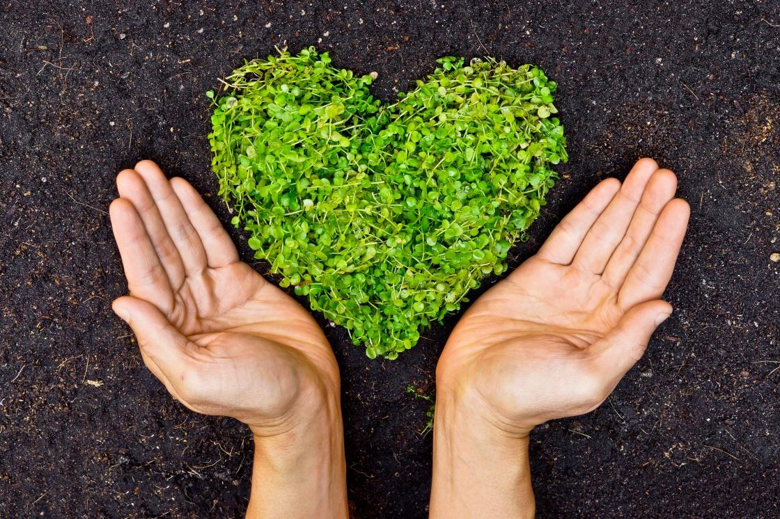 Inspirasi Hadiah Valentine yang Eco-Friendly untuk Pasangan